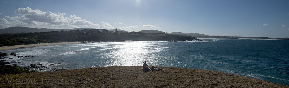 kangaroo on a cliff