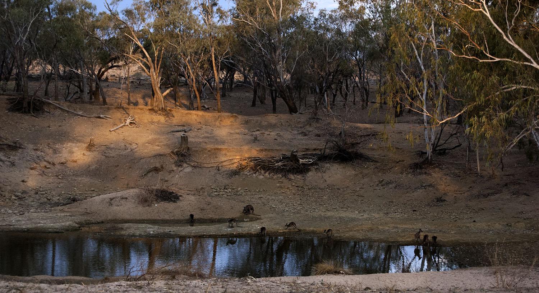 Drought Lloyd Jones Weir